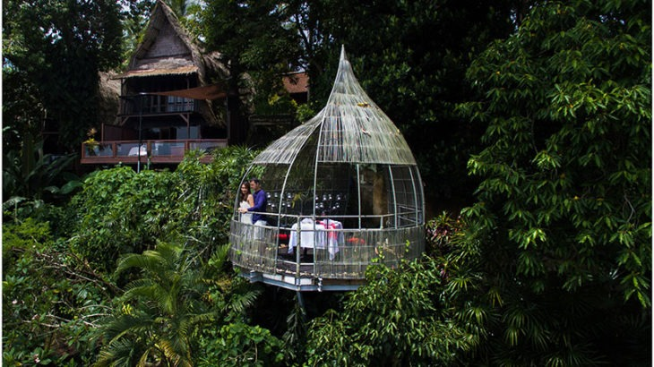 Birds-Nest-2